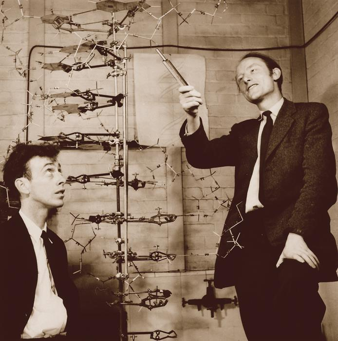 8.2 Structure of DNA Watson and Crick determined the