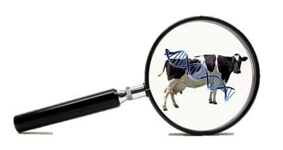 Identify methods to achieve herd goals SETTING GOALS Focused use of genetic information