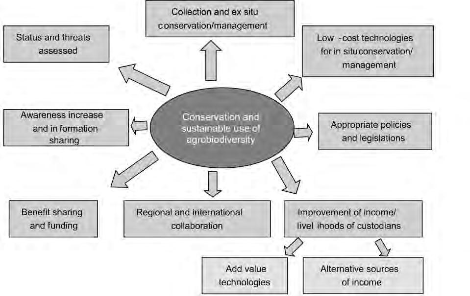 200 Figure 2. Elements of the strategy for promoting in situ/on-farm conservation of dryland agrobiodiversity. having specific qualities that make them desirable to local communities.