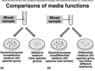 Media that are both selective and differential Mannitol salts agar