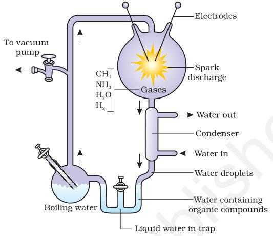 They created electric discharge in a closed flask containing CH4, H2, NH3 and water vapour at 800 0 C. He observed formation of amino acids.