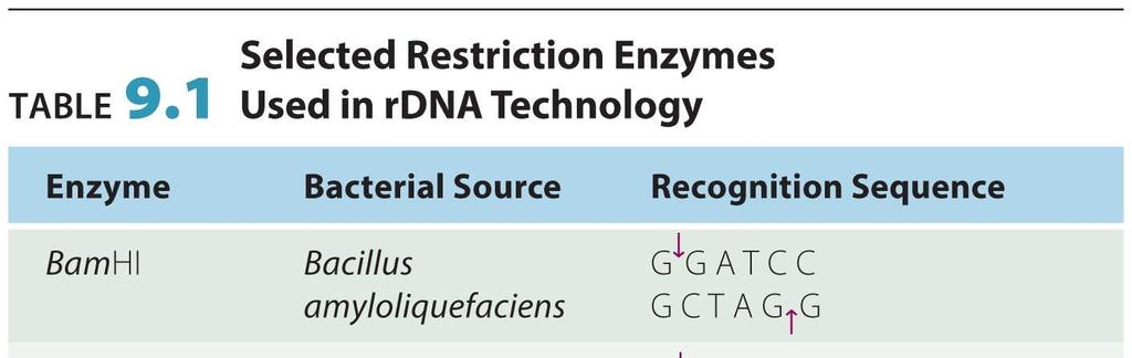Restriction enzymes: from chapter 13 A restriction enzyme or restriction endonuclease is an enzyme that cuts DNA at or near