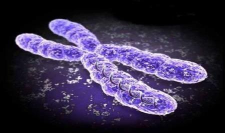 To be an effective vector the plasmid must have: a. b. c. 2. Artificial Chromosomes as Vectors Artificial Chromosomes have been developed by Scientists to act as vectors.