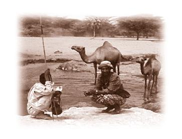 Camel husbandry and production The problem and the approach Pastoralists in northern Kenya have continually suffered from poor food security.