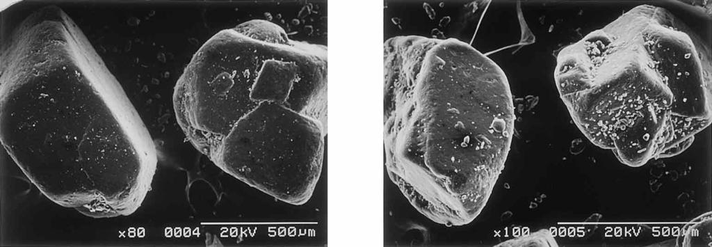 December 2002 1543 (a) (b) (c) (d) (e) Fig. 1. SEM Photographs of Acetaminophen (a) Size I; (b) Size II; (c) Size III; (d) Size IV; (e) Size V. Table 2.