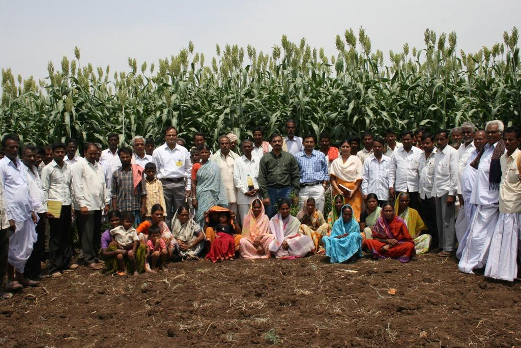 On-farm sweet sorghum production for biofuel use Worked with more than 10,000 farmers in Telangana and Maharashtra Supplied the seeds,