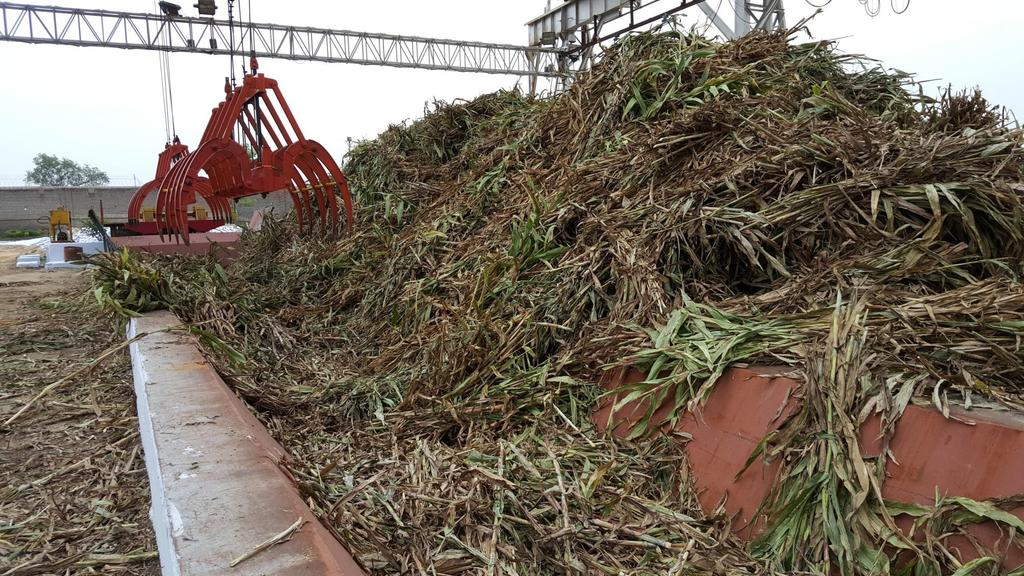 Sweet sorghum grown in sugar mill area was crushed in factory Sweet