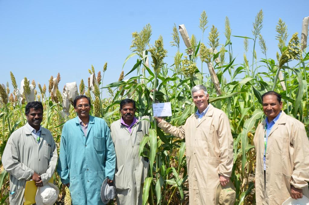 New sorghum hybrid with 17% Brix and >90 tons fresh biomass