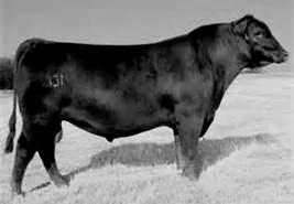AAR New Trend Boyd New Day 8005 SVF Forever Lady 57D SAF Focus of ER MCC Miss Focus 134 MCC Miss Chief 519 CED WW YW YH Milk $EN MW MH SC + 16 (.87) + 61 (.92) + 114 (.89) +.9 (.