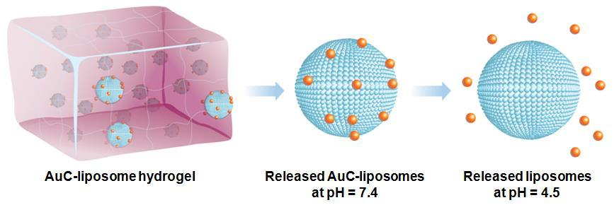 A Hydrogel for Topical Antimicroibal Delivery PEGDMA concentration 0.