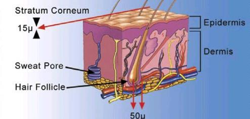 I. Reservoir and Transdermal Delivery Systems Schematic representation of a cross section through human skin.