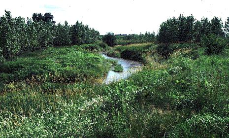 Restoring degraded watersheds &