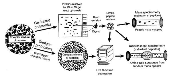 Proteomics aims to detect and quantify a system s entire protein content Strengths: -> info about post-translational modifications -> high throughput possible due to