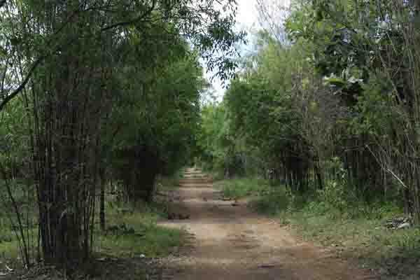 Chapter 1: Forest and Biodiversity The tract borders on Kolar district in the northeast, on Mandya district in the southwest, on Chamrajnagar district in the south and on Salem district of Tamil Nadu