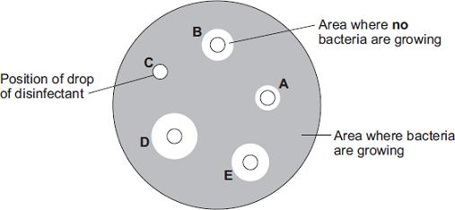 (b) After the culture had been prepared, the student added one drop of each of five disinfectants, A, B, C, D and E, onto the culture. The diagram shows the appearance of the Petri dish 3 days later.