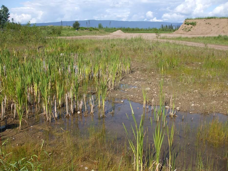 60 Figure 7. Site near Ft. Liard where western toad tadpoles were found in 2007 and 2008.