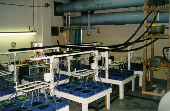 Continuous flow toxicity laboratory
