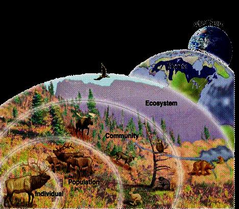 This occurs when soil is permanently frozen These biomes have very little precipitation We live in this biome