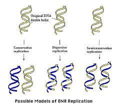 Semi Conservative Replication of DNA This means that each daughter DNA