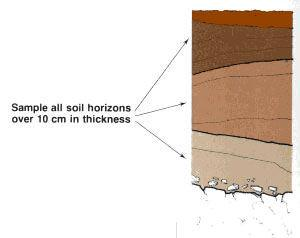 Sample all soil horizons over 10 cm in thickness; all samples should represent natural soil horizons or 2.0 The purpose of the soil survey 2.