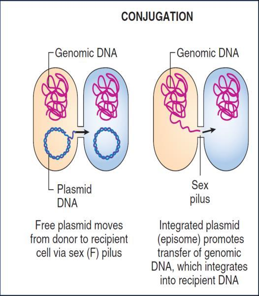Horizontal Gene transfer (HGT) Horizontal gene transfer is transferring DNA from one organism to anther in a horizontal way and that DNA can be stably incorporated in the recipient permanently