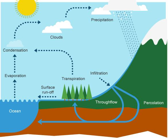 The Water Cycle 70% of precipitation ends up in streams, rivers, and the ocean the remaining 30% seeps into the water table Some of this resurfaces from springs,