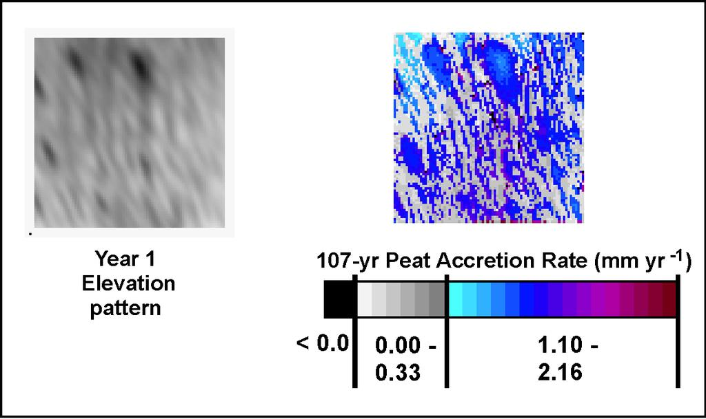Figure 7. Pattern of differing magnitudes of peat accretion rate during the century-long simulation.