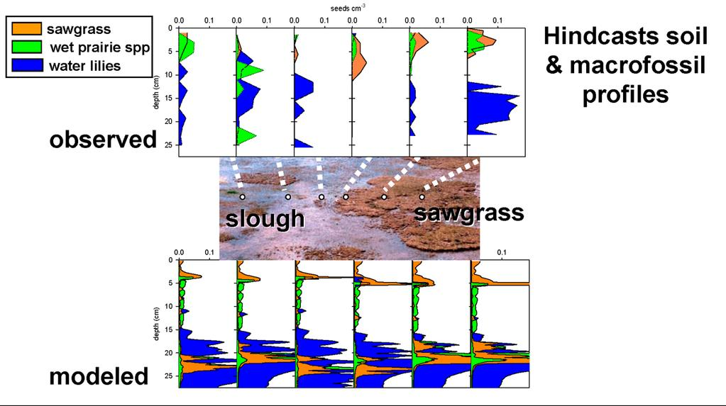 Figure 4. Simulated v. observed macrofossil profiles for a transect of soil cores in wet prairie/slough-sawgrass at SRS-2.