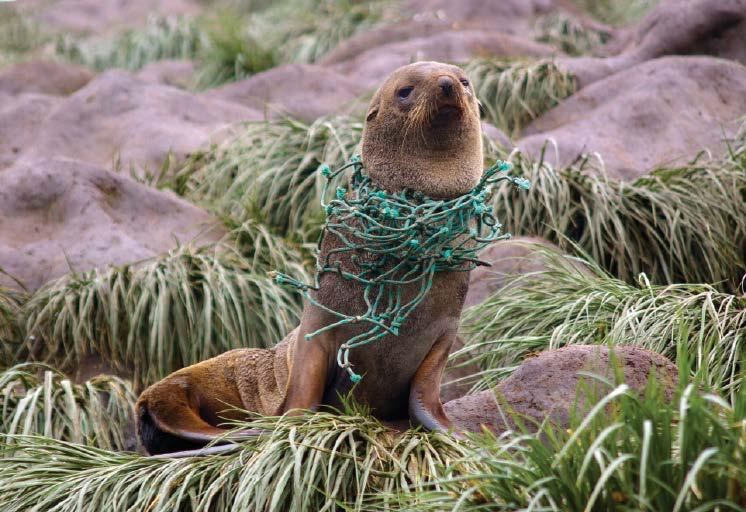 MEETING REPORT A Cross-Sectoral Approach to Tackle Ocean Plastic Pollution Plastic in the Oceans: Challenges and Solutions Cambridge, United Kingdom, 7 March 2018 An Antarctic fur seal (Arctocephalus
