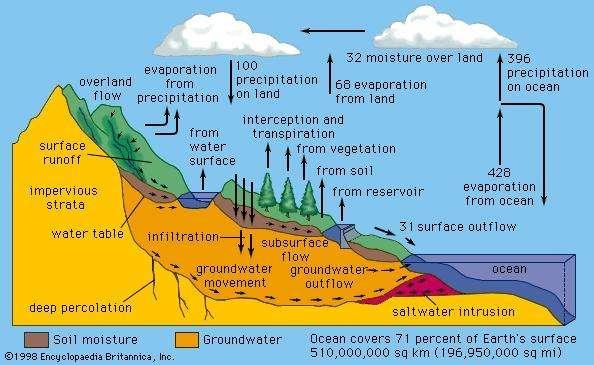 groundwater. Because watersheds are complex systems, each tends to respond differently to natural or human activities.