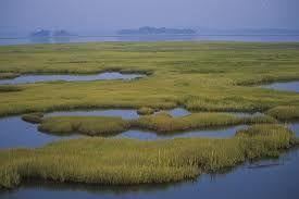 16 A is an area of land that is saturated, or soaked, with water for at least part of the year. Bogs, marshes, and swamps are types of wetlands.