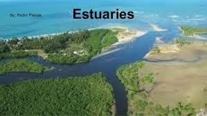 ecosystems in streams can have areas of fast-moving and slow-moving water, with organisms adapted to each area. Where River Meets the Sea What is an estuary?