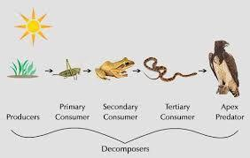 chemical energy that an organism has in its is available to consumers. In this way, is from organism to organism. A is the path of energy transfer from producers to consumers.