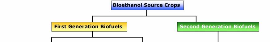 Bioethanol production The production of bioethanol from traditional means, or 1 st