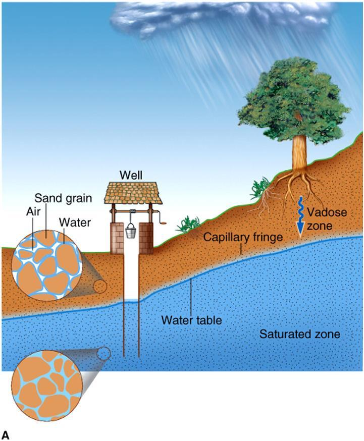 The Water Table Water table: the surface separating the vadose zone