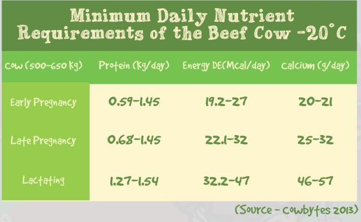 Lesson 3: Cow & Heifer Management Nutrient Requirements of Heifers & Cows The function of heifers and cows is to produce calves. Producing a calf puts great demands on the heifer or cow s body.