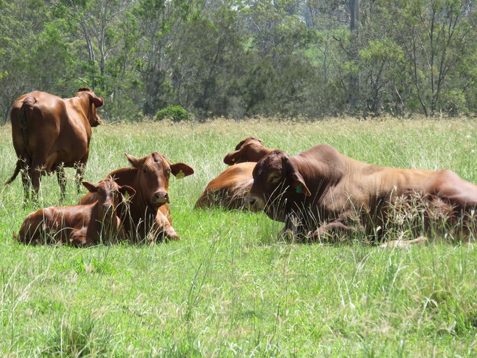 Strategies to improve herd fertility Implement a genetic improvement programme -