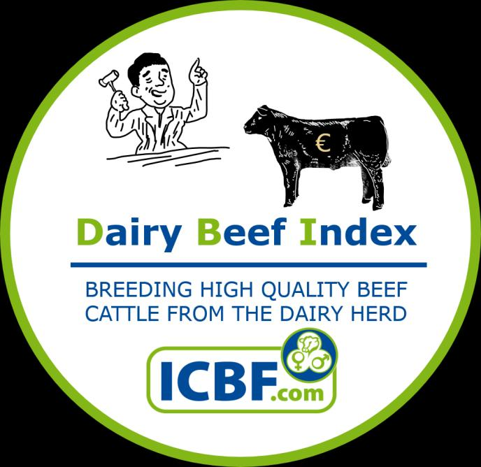 The Dairy Beef Index Siobhán Ring