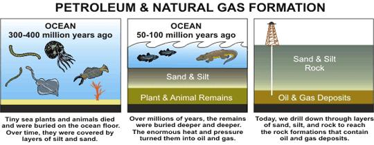 Forming fossil Fuels All fossil fuels begin as organic matter trapped in sedimentary rock.