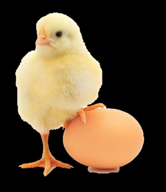 INFORMATION 18 POULTRY BREEDS AND SYSTEMS COMMERCIAL BREEDS GROWING SYSTEMS DESCRIPTION Lohmann, Isa Brown Free range Allowed access to outside range each day during most daylight hours.