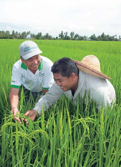 56 NESTLÉ IN SOCIETY REPORT 2016 Rural Development G4-DMA: Local Communities, G4-EC7, G4-EC8, G4-SO1 The Benefits of NESTLÉ PADDY CLUB 1 2 3 PEOPLE Providing environmentally friendly means to