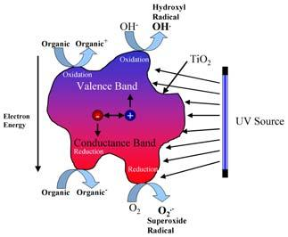 create hydroxyl radicals and oxidize surface-absorbed contaminants The conduction band