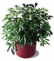 PLANT ORDER FORM 5675 McLaughlin Road, Mississauga, Ontario, L5R 3K5 Tel: 905-283-0500 Fax: 905-283-0501 Toll Free: 1-877-437-4247 torontoexhibitorservices@ges.com www.gesexpo.