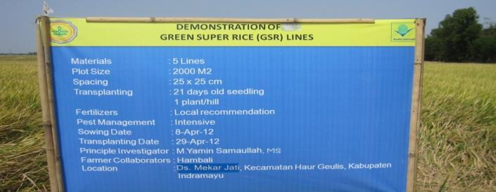 POSTER Figure 1. Agronomic performace of GSR Pre-released varieties, Indramayu, DS 2012. Table 2.Yield and yield components of GSR Pre-released varieties along with Ciherang, Indramayu, DS 2012. No.