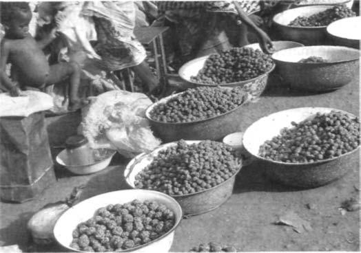 market in Burkina Faso. (photo: N. Lamien) Plate 7.