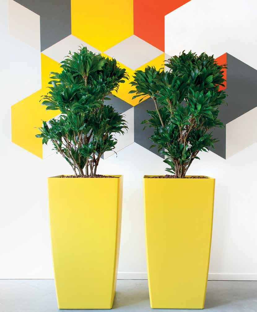 PLANTERS IN LIVING COLOURS - PDF