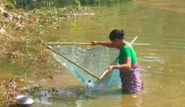 Fisherfolk Present status The whole population an admixture of tribal &