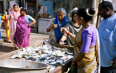 However, women help men in post-harvest handling of fishes in capture fisheries Social