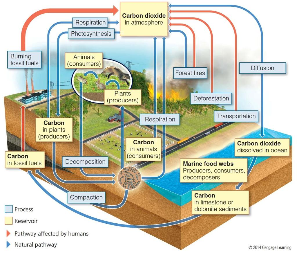 Environmental Science 101 Chapter 11 Water Pollution Pdf