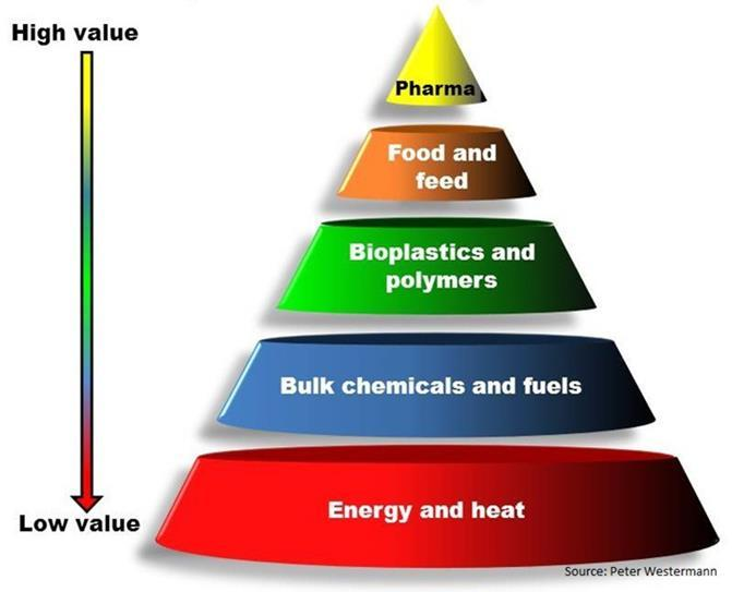 Adding Value in the Bioeconomy The Bioeconomy encompasses the production of